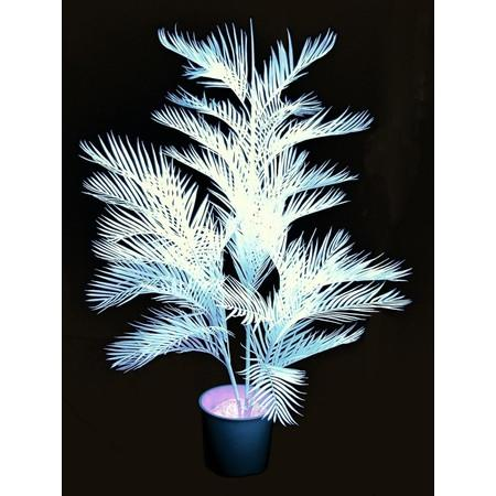 Party kellék - Europalms - Kentia palma 170